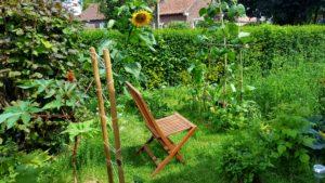 Jardin cultivé en permaculture