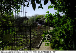 Jardin Lillois